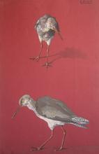 André MARGAT (1903-1999) - Études d'oiseau limicole