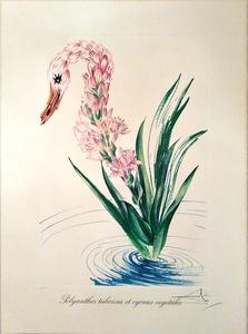 萨尔瓦多·达利 - 版画 - Water-hybicus + Swan