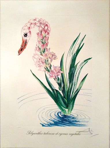 Salvador DALI - Print-Multiple - Water-hybicus + Swan