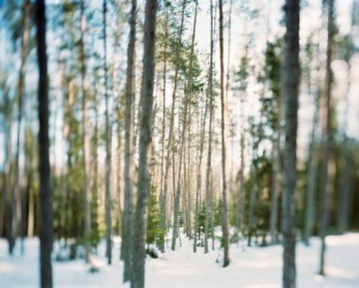 Charles XELOT - Fotografia - Flou printemps / 4 saisons