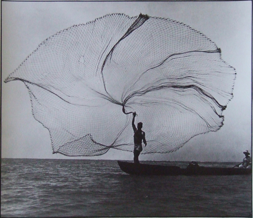 Leo MATIZ - Photography - Pavo real del mar, Santa Marta, Colombia
