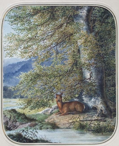 "Carl HAUNOLD - Dibujo Acuarela - ""Roe Deer"", Watercolor by Carl Haunold, 1871"