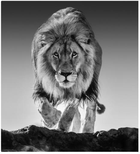 David YARROW - Fotografia - Genesis