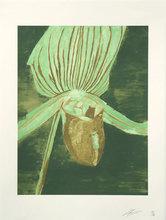 Luc TUYMANS - Grabado - Orchid