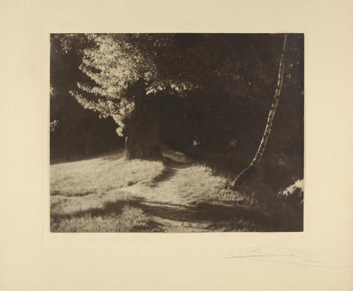 Josef SUDEK - 照片 - Forest interior