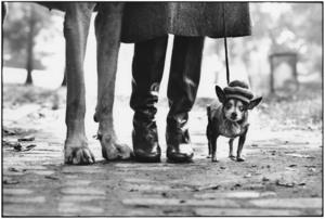 Elliott ERWITT - Fotografie - New York Dog Legs