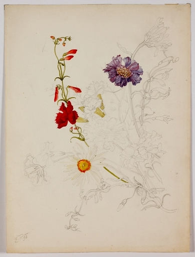 """Ernst PAYER - Drawing-Watercolor - """"Flower Study"""", 1898"""