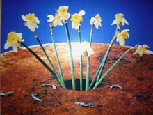 Nobuyoshi ARAKI - Photography - Flowers (Shikikei)