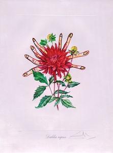 萨尔瓦多·达利 - 版画 - Surrealist Flower: Dahlias of Dali