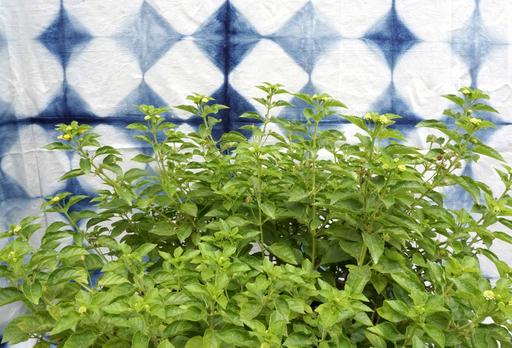 Sumit MEHNDIRATTA - Stampa Multiplo - lush botanic