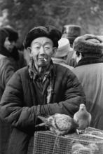 ZHU Xianmin - Fotografia - Pigeons