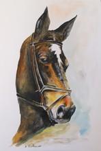 Dumitru BUDACAN (1969) - Cavallo