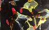 Tony SOULIÉ - Peinture - Dreamed Flower iii