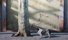 Carlos DIAZ - Painting - Love and dog