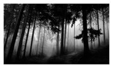 Robert LONGO - Estampe-Multiple - Untitled (Fairmount Forest)
