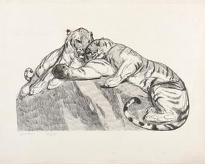 Paul JOUVE - Grabado - Les tigres au repos