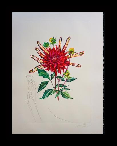 Salvador DALI - Grabado - Florals Dahlia Venus