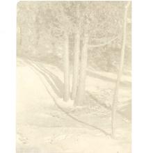Edward STEICHEN - Fotografia - Judgement of Paris--A Landscape Arrangement