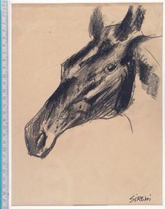 Mario SIRONI - Drawing-Watercolor - Testa di puledro
