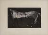 James HAVARD - 绘画 - White Horse