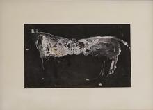 James HAVARD - Pintura - White Horse