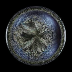 Seb JANIAK - Photography - Morphogenetic Field - Beluga caviar