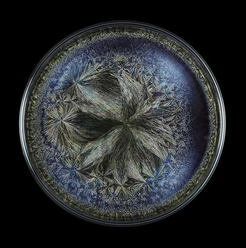 Seb JANIAK - Fotografia - Morphogenetic Field - Beluga caviar