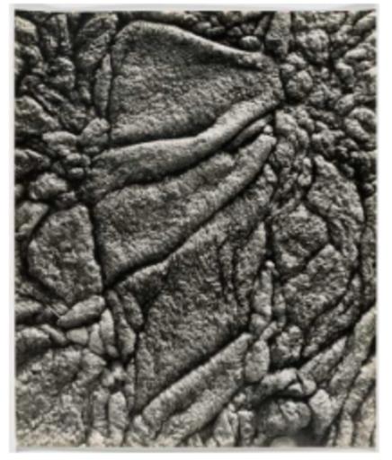 Lucien CLERGUE - Photography - Le marais d'Arles