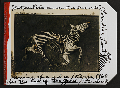 Peter BEARD - Fotografia - Zebra