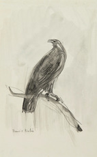 Francis PICABIA - Dibujo Acuarela - L'aigle