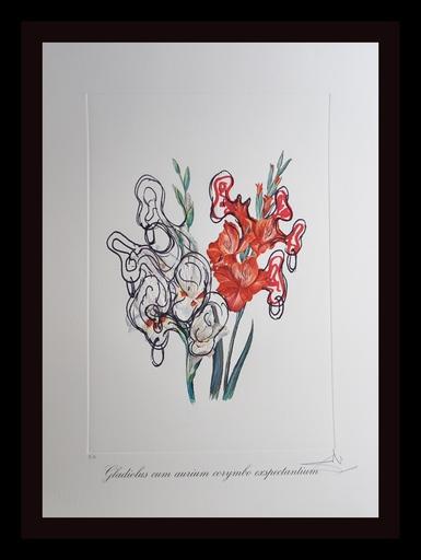 Salvador DALI - Grabado - Florals Pirate's Gladioli