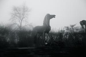 EROS & GAÏA - Photo - Echappée belle