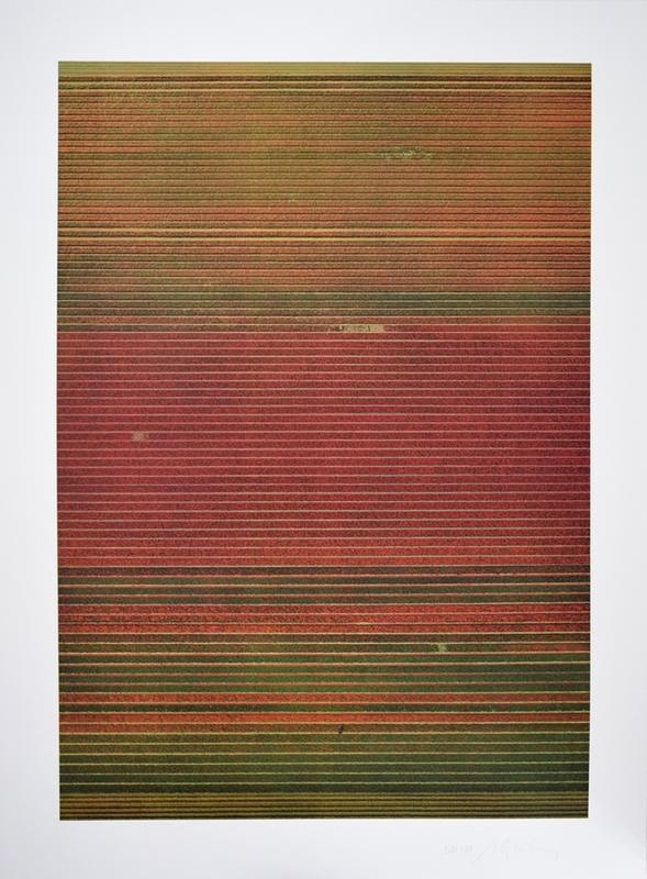 Andreas GURSKY - Print-Multiple - Ohne Titel XVIII (Tulpenfelder)