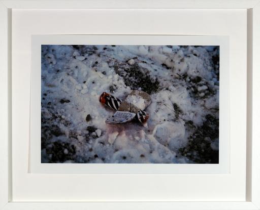 Walter DAHN - Fotografia - Notlandung