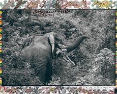 Peter BEARD - Photography - Ele in Bush - Sold