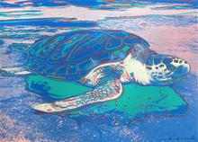 Andy WARHOL - Estampe-Multiple - Sea Turtle