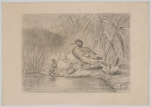 "Carl I JUTZ (1838-1916) - ""Duck Family"", 1881, Drawing"