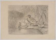 "Carl I JUTZ - Dibujo Acuarela - ""Duck Family"", 1881, Drawing"