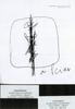Lucio FONTANA - Dessin-Aquarelle - Concetto spaziale