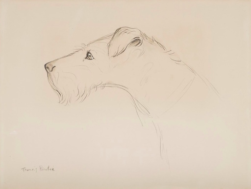 弗朗西斯·毕卡比亚 - 水彩作品 - Chien de profil
