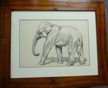 André MARGAT (1903-1999) - elephant