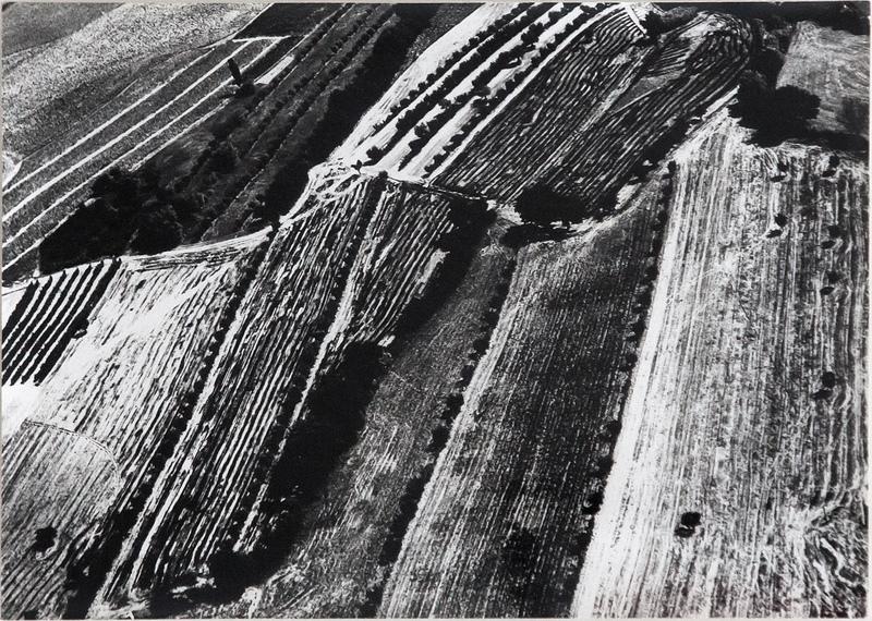Mario GIACOMELLI - Photography - PRESA DI COSCIENZA SULLA NATURA