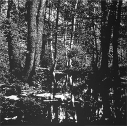 Rüdiger WÖRSTER - Painting - Der Wald und seine Formen