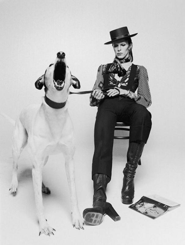 Terry O'NEILL - Fotografie - David Bowie, Diamond Dogs (v2)