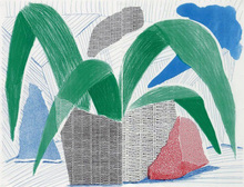David HOCKNEY - Estampe-Multiple - Green Grey & Blue Plant