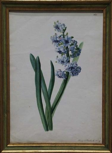 """Franz BLASCHEK - Disegno Acquarello - """"Flower Study"""" by Franz Blaschek, early 19th Century"""