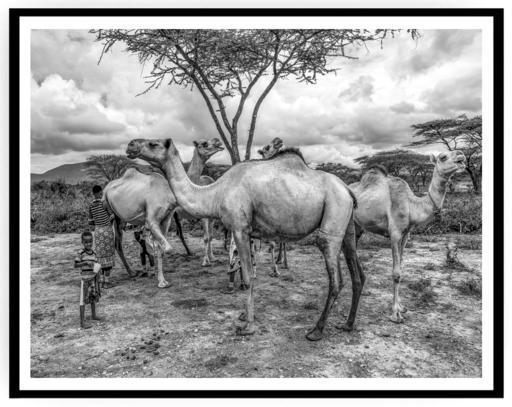 Mario MARINO - Photography - Young Boy with Dromedars, Africa, 2018.
