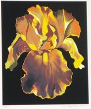 Lowell NESBITT - Grabado - *Iris Portfolio