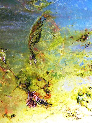 Richard GRENERON - 照片 - Decomposition Vegetale