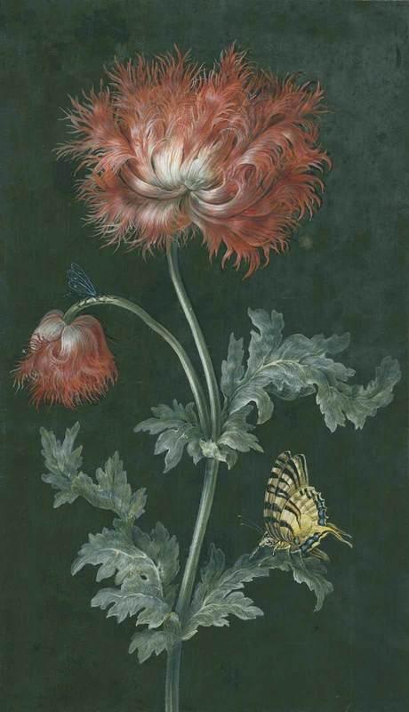 Barbara Regina DIETZSCH - Drawing-Watercolor - Gefüllter roter Mohn.